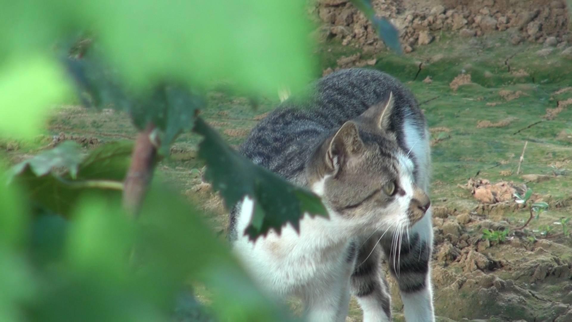 我们村不一样 | 青岛平度:一只猫眼里的沙北头村