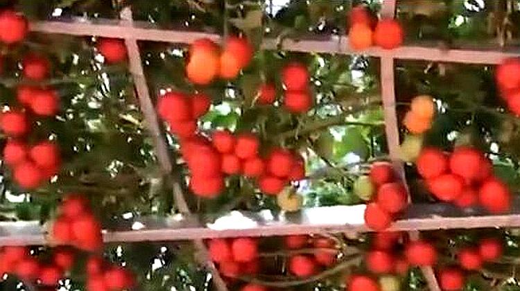 乡村追梦人丨一年玛莎拉蒂两年帕拉梅拉……看网红小伙如何玩转现代农业