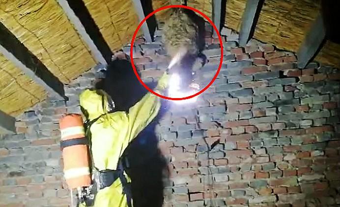 50秒丨真吓人!潍坊昌乐一农户家中惊现直径超半米的马蜂窝
