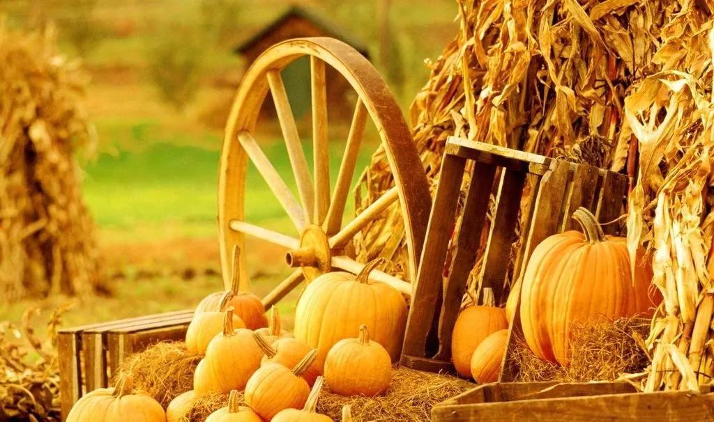 闪电头评丨丰收粮食,更要让农民收获美好未来