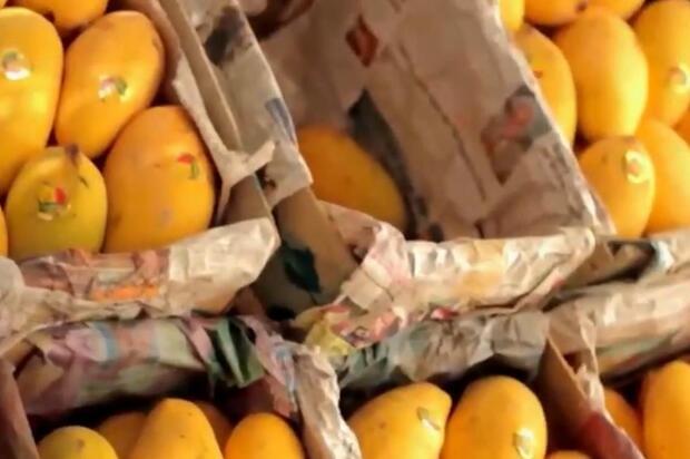 """奋进新山东丨巴基斯坦水果为什么想""""落户""""青岛?这个短片给你答案"""