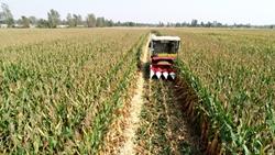 52秒|平均亩产867.5公斤!聊城市夏播玉米籽粒机收创高产新纪录
