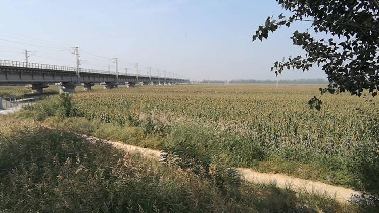 聊城市应急疏散基地规划11年仍是玉米地 省人防办主任:不作为