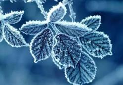 海丽气象吧丨降温+霜冻!今夜明晨临沂最低气温6℃