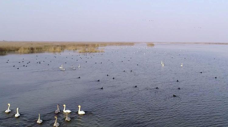 飞阅齐鲁 瞰万山红遍:东营黄河三角洲迎来首批迁徙候鸟