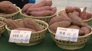 甘薯助力乡村振兴 泗水将打造全国最有影响力甘薯全产业链产品加工集散基地