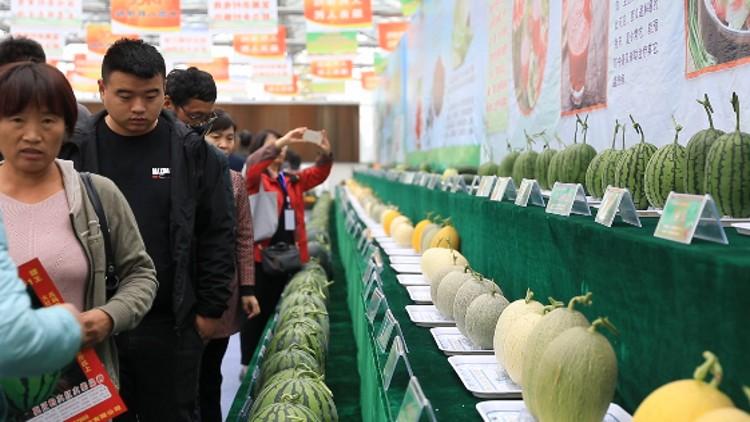 74秒丨逛吃!逛吃!300多个瓜类新品种亮相潍坊昌乐