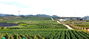 贵州东西部协作成果主题采访|青岛:打通安顺高田镇脱贫攻坚最后一条路