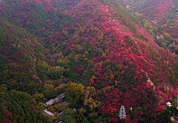 組圖|濟南:高山紅葉進入觀賞季節 如火焰點亮山頭