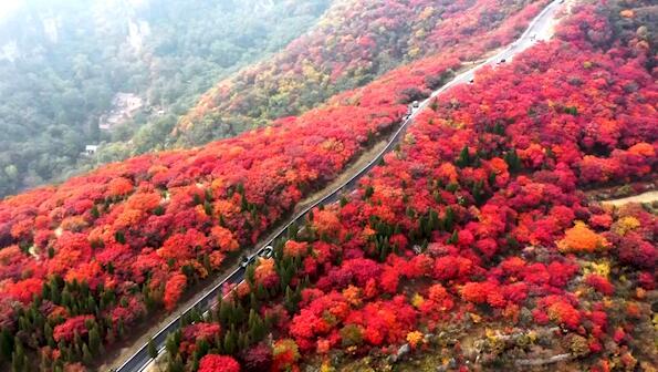 飞阅齐鲁 瞰万山红遍:穿越淄博最美公路 宛如秋日水彩画廊