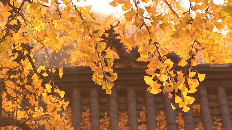 醉美秋色丨58秒航拍齐鲁大地深秋美景 层林尽染五彩斑斓