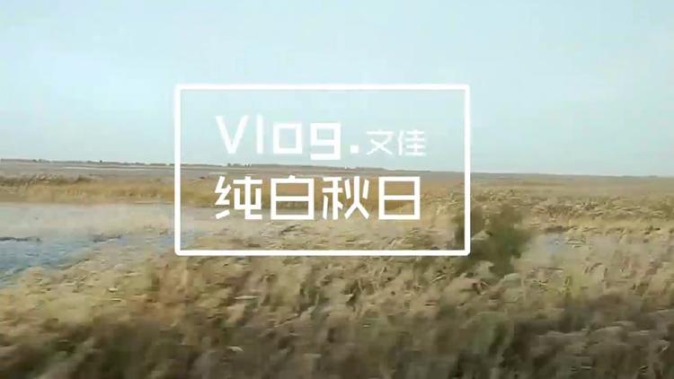 "Vlog|秋天也能看到飞雪?踱步800米芦花栈道 探""鸟类国际机场"""