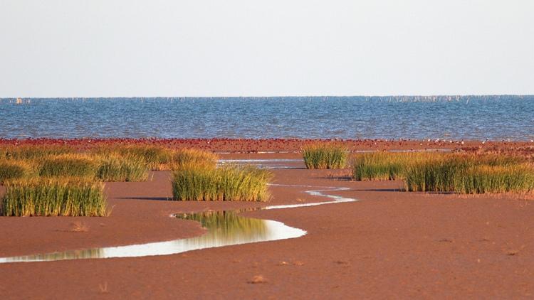人民日报关注山东黄河生态保护:水质优于国家年度目标 湿地生态明显加强