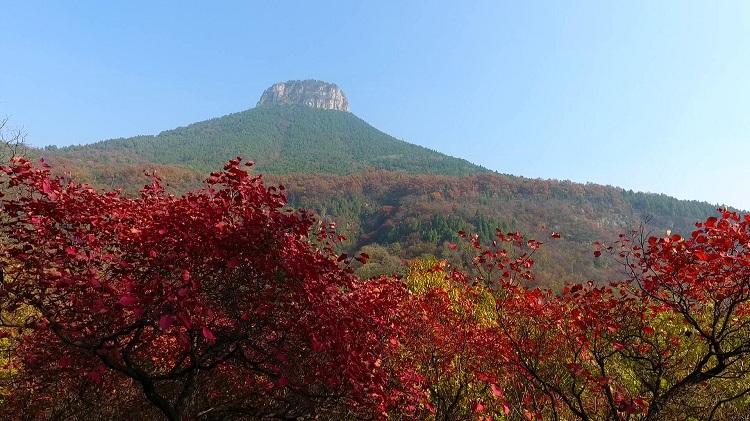 晒晒我家的红叶丨枣庄抱犊崮红叶点缀山麓 远望美如油画