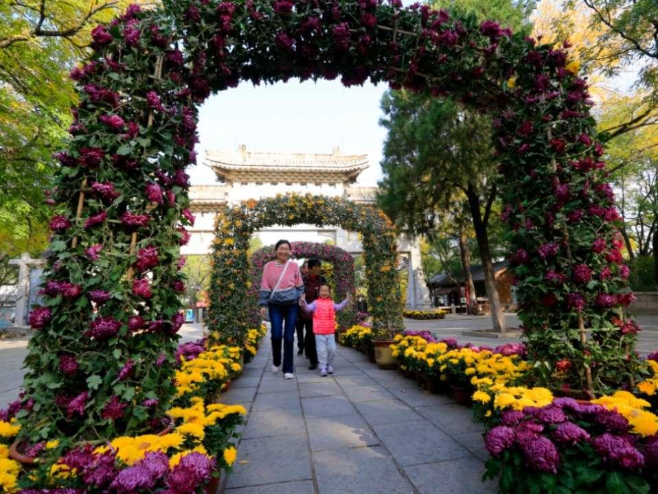 """济南八景之一""""佛山赏菊""""正是好时候,错过要等明年了"""