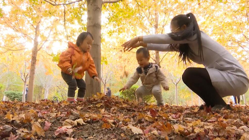 晒晒我家的红叶丨枫林吐艳醉云霞 青岛西海岸千亩红枫林迎来最佳观赏期