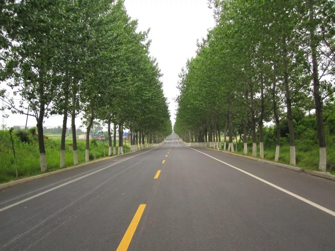 山东:2020年底前将基本实现全省农村通户道路硬化