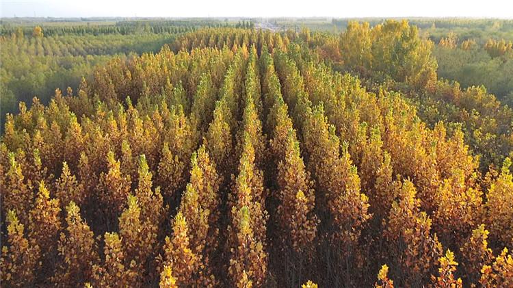 醉美秋色丨黄色秋叶、红色硕果...95秒航拍带你感受利津五彩斑斓的别样秋味