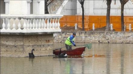 36秒|怀疑鹅生!校园湖面结冰冻住天鹅 大爷划船救鹅也被困