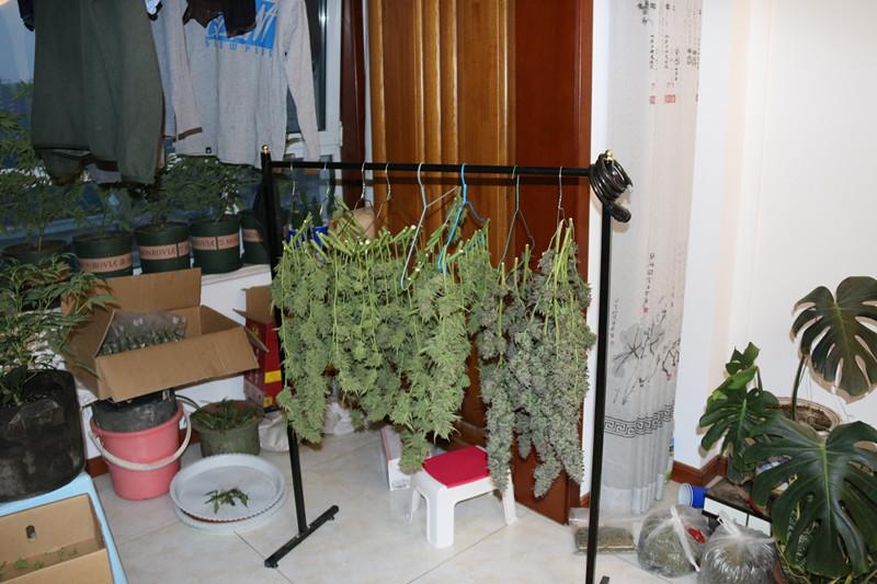 46秒| 11公斤大麻被查获 东营垦利特大网络贩毒案已收网