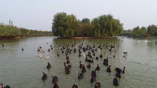 61秒|初冬时节,台儿庄双龙湖湿地生态旖旎醉游人
