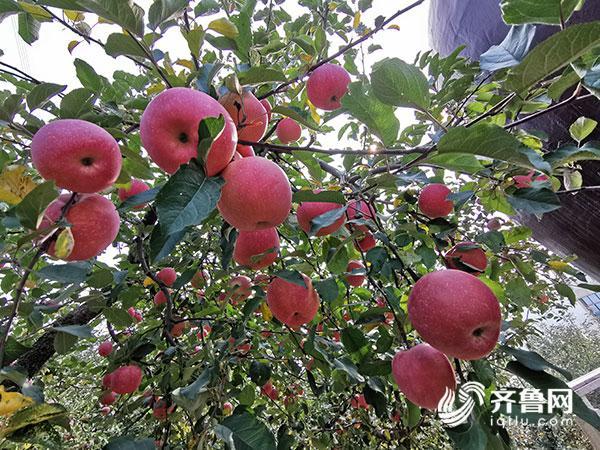http://www.shangoudaohang.com/yejie/241889.html