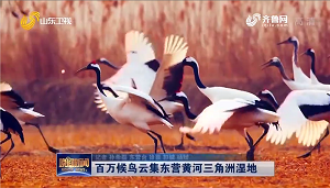 百万候鸟云集东营黄河三角洲湿地