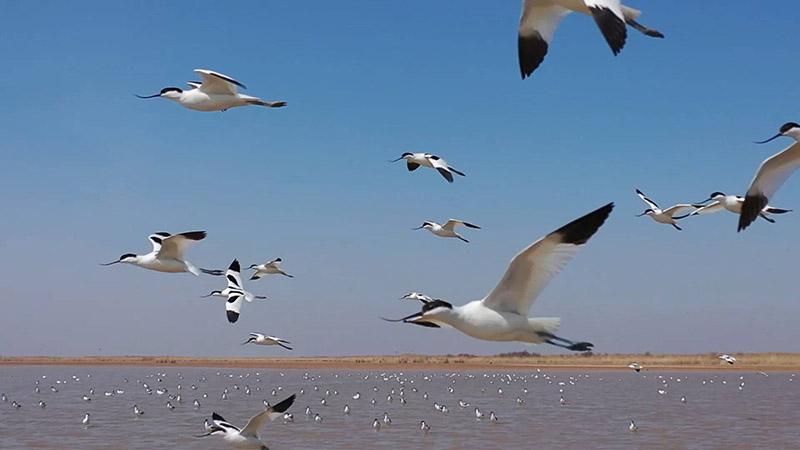 33秒丨壮观!百万只候鸟组团抵达东营黄河三角洲湿地