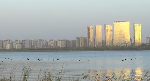 Vlog丨打卡临沂滨河!芦苇、水鸭……初冬美景尽揽眼底