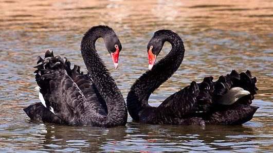 被大黑鸡吧操的嗷嗷直���9��y�+:j��i�_53秒丨齐河黄河湿地迎大批候鸟越冬 首次发现野生黑天鹅来做客