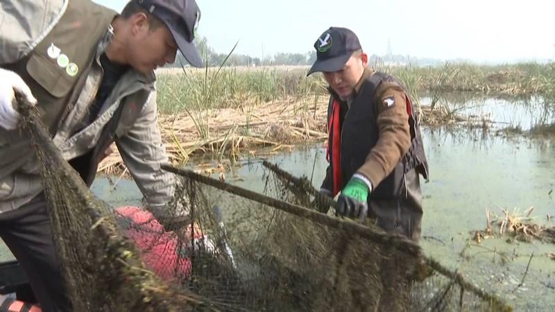 青岛城阳志愿者清除湿地违法网具 还迁徙鸟类良好生存环境