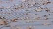 海丽气象吧丨滨州发布降水和大风降温预报 提醒市民注意防范