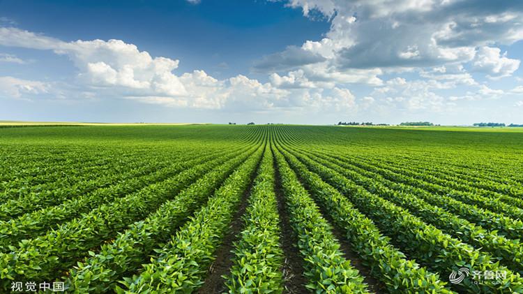 给蔬菜晒太阳买保险?农业保险新知识get起来!