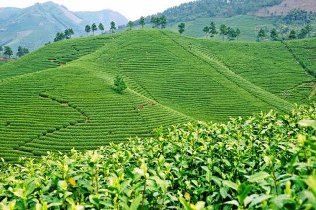 """理响中国 小村庄要有大作为:打造""""安吉白茶""""金字招牌"""