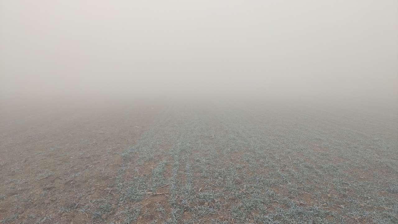 临沂发布大雾黄色预警 局部能见度不足200米