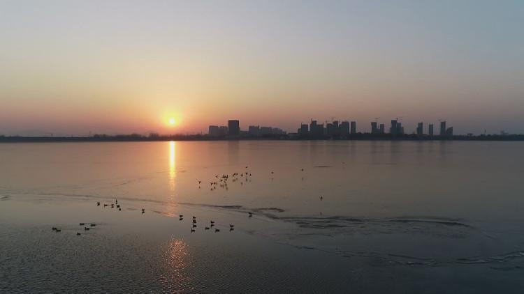 新泰青云湖中罕现成群野鸭栖息越冬