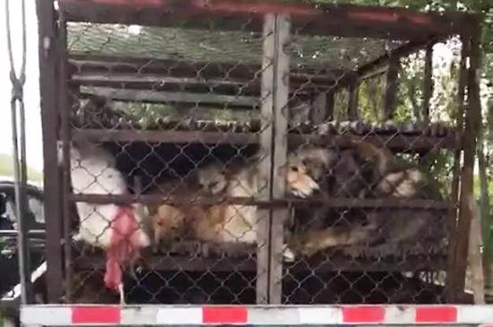 德州爱心团救下50只宠物狗 悉心照料待认领(图)