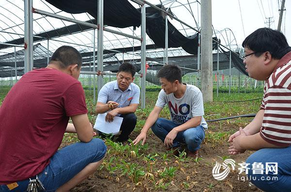黄山镇凤凰庄村、丰上村第一书记查看半夏种植情况.JPG