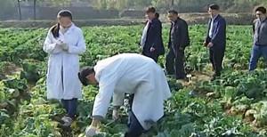 """""""走在前列""""系列报道⑥创新机制,山东给农业插上科技的翅膀"""