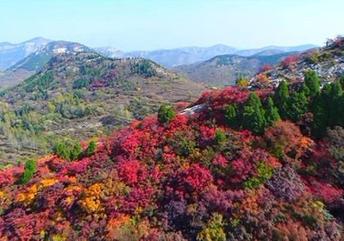 航拍淄博博山九龙山漫山红叶美到窒息
