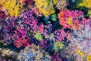 鸟瞰泉城公园植被种类繁多 色彩缤纷迷人眼
