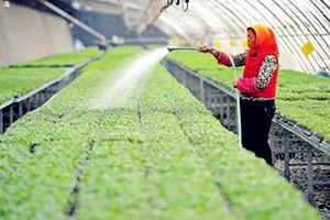 """【农业】 到2020年山东建设农业""""新六产""""示范县50个,示范主体600家"""