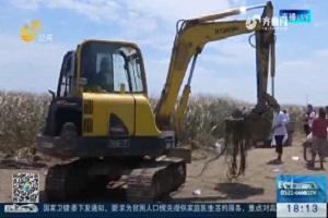 【抢先救灾进行时】应急防疫:潍坊寿光最大养殖区被洪水淹没 大批牲畜死亡