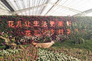 国庆假期到青州畅游花的海洋 100个花卉新奇特品种亮相