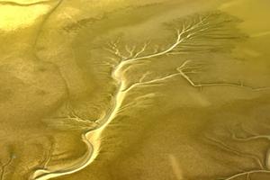 大河息壤!原来黄河如许孕育天下增长速率最快的地皮