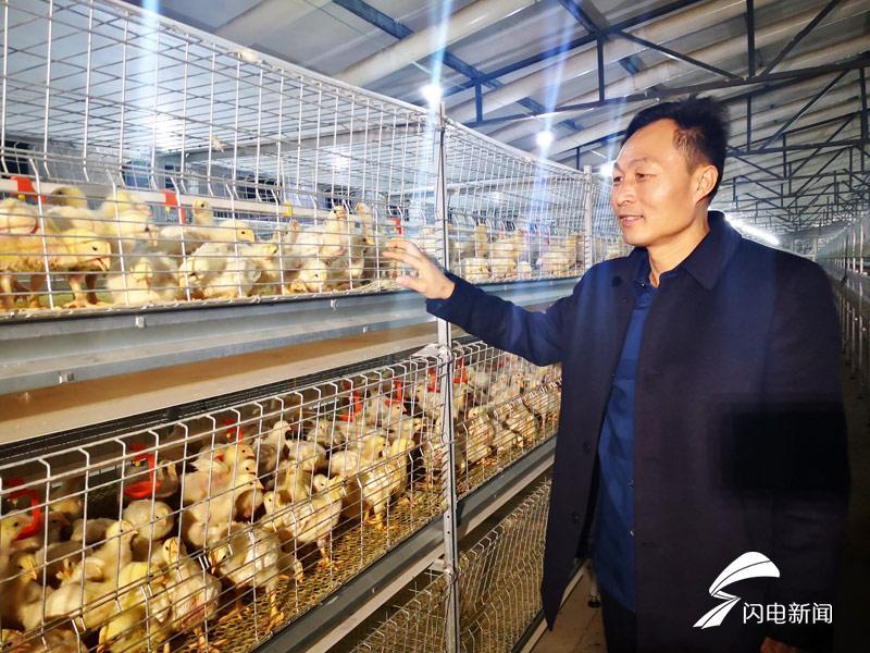 """泰安新泰:自动化养出""""贵族鸡"""""""
