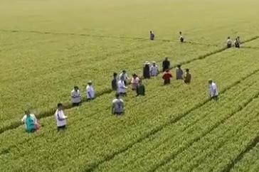 【推动乡村振兴 打造齐鲁样板】山东:培育齐鲁粮油品牌 助力乡村产业振兴