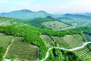 今年山东将打造一批样板村、镇、县 助力乡村振兴