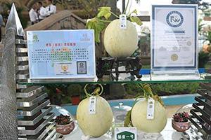 世界最甜甜瓜品种出自这儿!滨州鑫诚现代农业新业态引领三产融合