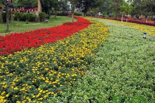 北京世园会山东展区向世界展示:山东花卉园艺水平有多高